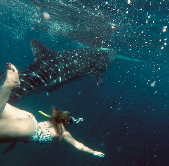 whale shark swimming Oslob, philippines travel